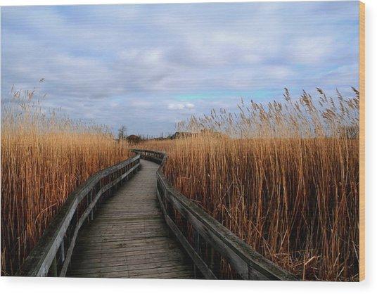 A Walk Through The Phragmites Wood Print