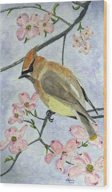 A Waxwing In The Dogwood Wood Print