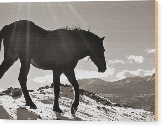 A Wild Horse In The Mountains Wood Print