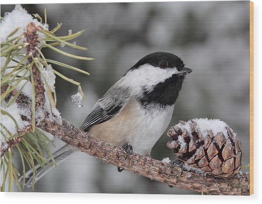 A Winter Perch Wood Print