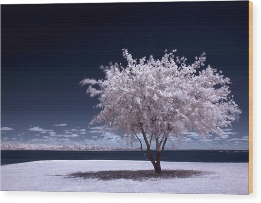 A Winter Summer Wood Print