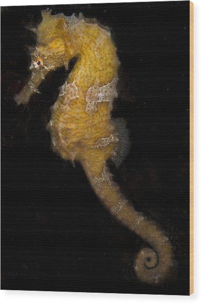 A Yellow Seahorse Wood Print