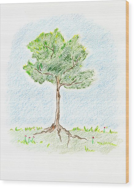 A Young Tree Wood Print