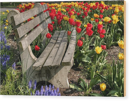 Abducted Park Bench Wood Print