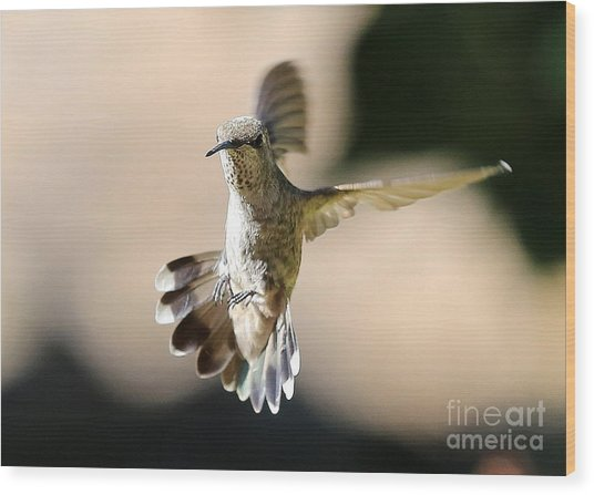 About Face Hummingbird Wood Print