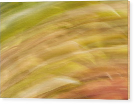 Abstract 15 Wood Print