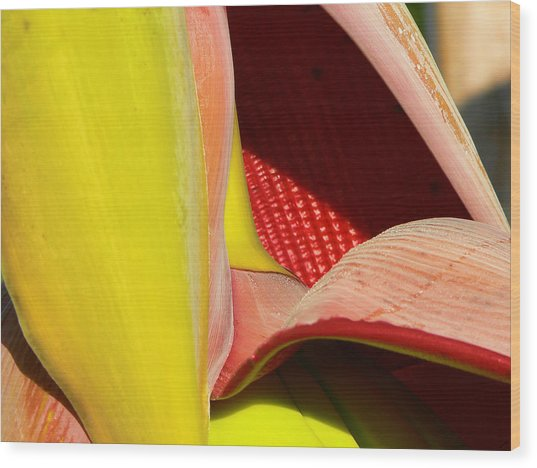 Abstract Banana Bloom Wood Print