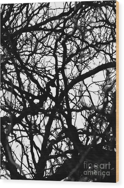 Abstract Branches Wood Print
