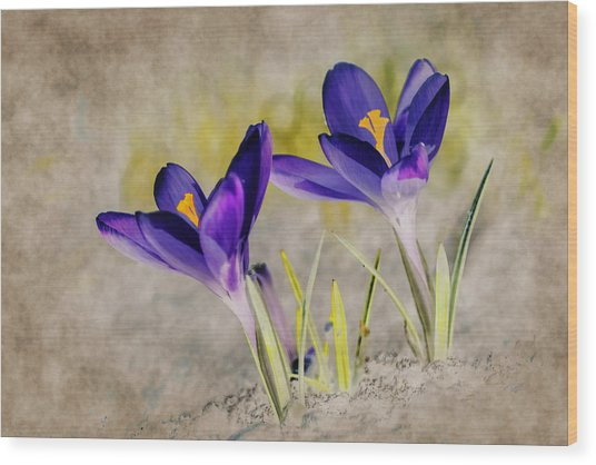 Abstract Crocus Background Wood Print