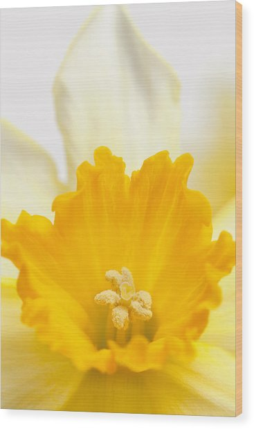Abstract Daffodil Wood Print