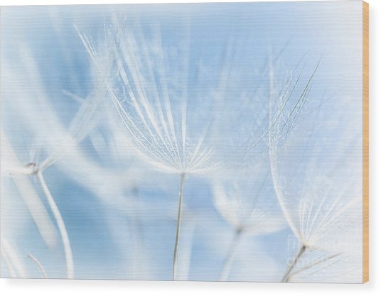Abstract Dandelion Background Wood Print by Anna Om