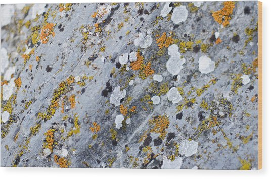 Abstract Orange Lichen 2 Wood Print by Chase Taylor