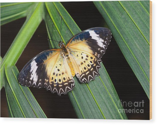 Butterfly On Leaves Wood Print