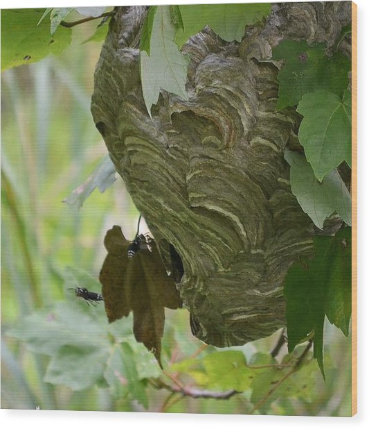 Abstract Wasp Wood Print