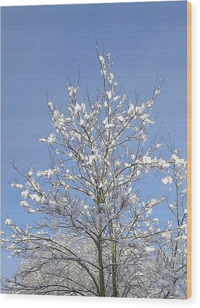 Ash Tree In Winter Wood Print