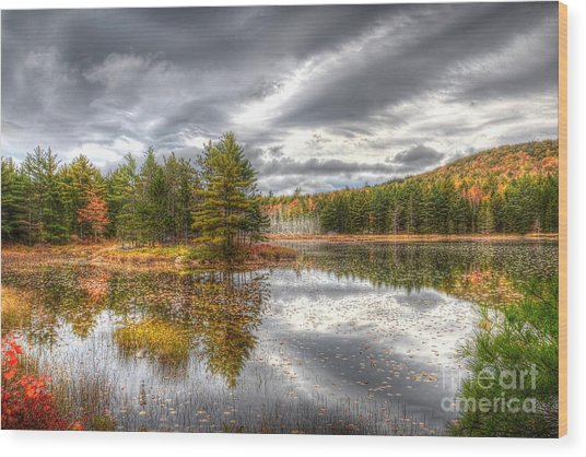 Acadia With Autumn Colors Wood Print
