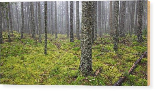Acadia Woods Wood Print