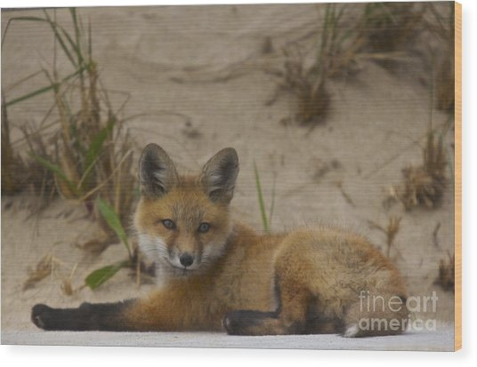 Adorable Baby Fox Wood Print
