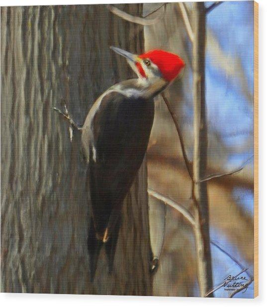 Adult Male Pileated Woodpecker Wood Print