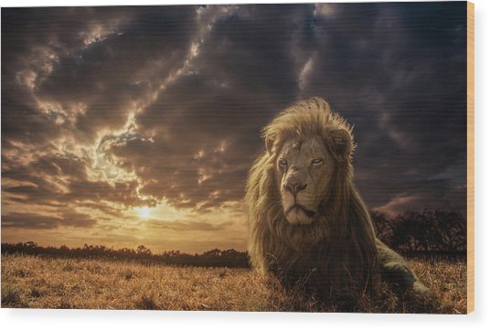 Adventures On Savannah - The Lion King Wood Print