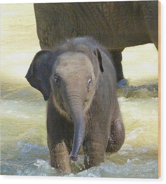 Adventurous Baby Asian Elephant  Wood Print