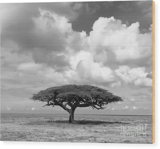 African Acacia Tree Wood Print