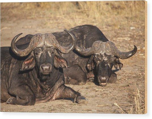 African Buffalo Wood Print by Craig Brown