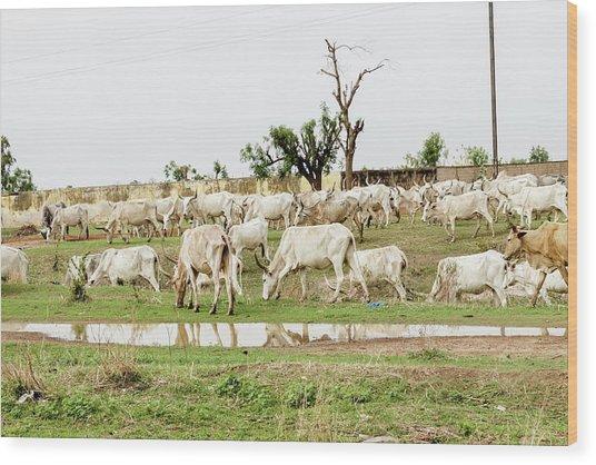 African Cows Wood Print by Jordiramisa