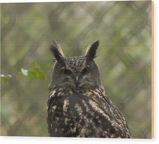 African Eagle Owl Wood Print