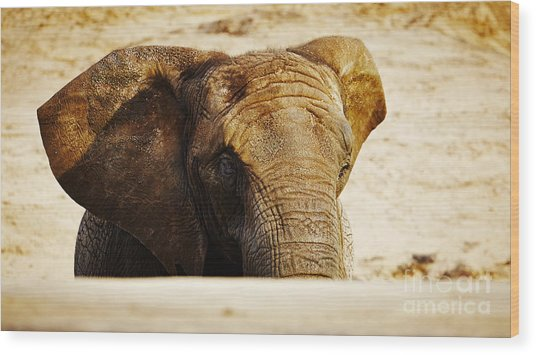 African Elephant Behind A Hill Wood Print