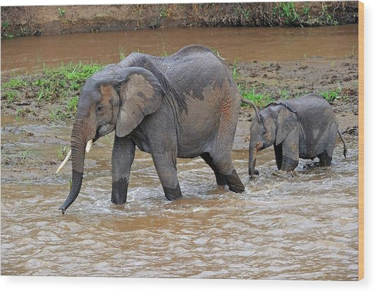 African Elephant Mother And Calf Wood Print