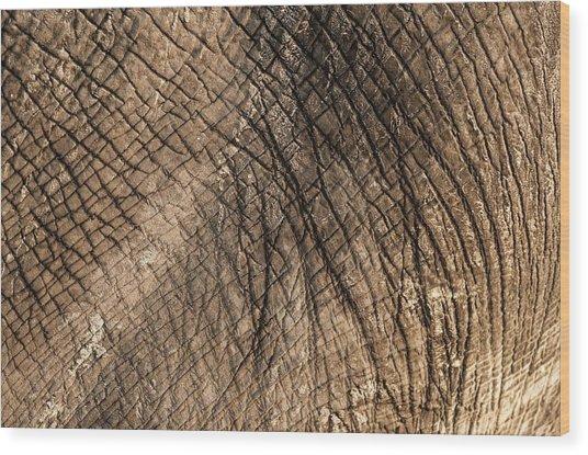 African Elephant's Skin Wood Print