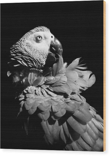 African Grey  Wood Print by Paulina Szajek