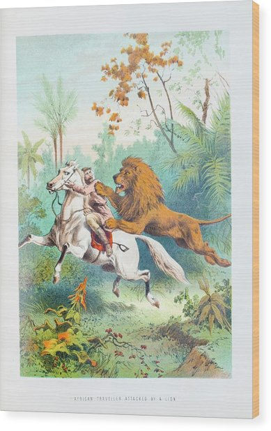 African Lion Attack Wood Print