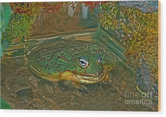 African Pixie Frog In Water Wood Print