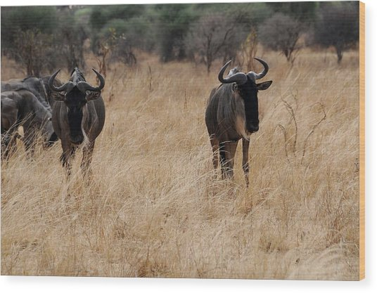 African Series Widerbeest Wood Print by Katherine Green