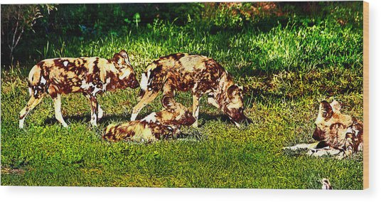 African Wild Dog Family Wood Print