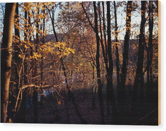 Afternoon Foliage Wood Print by Brian Lucia