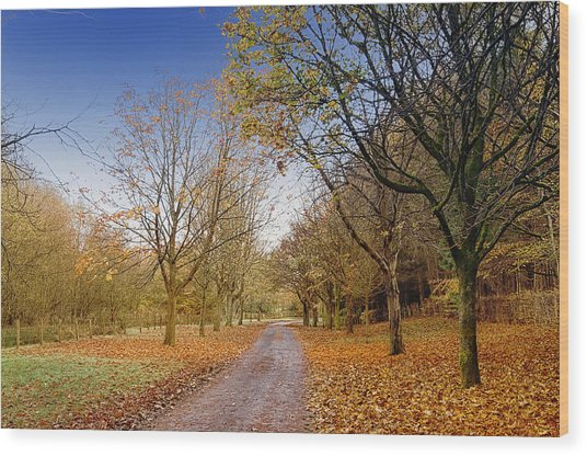 Afternoon In Autumn  Wood Print