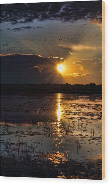 Late Afternoon Reflection Wood Print