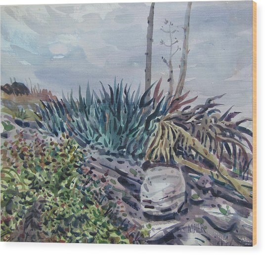 Agave Wood Print by Donald Maier