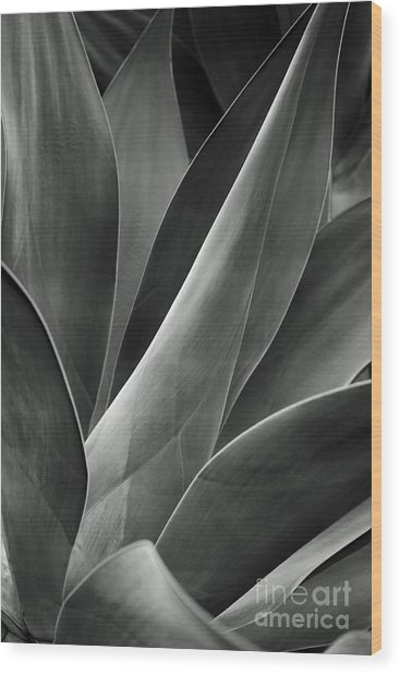 Agave In Black And White Wood Print