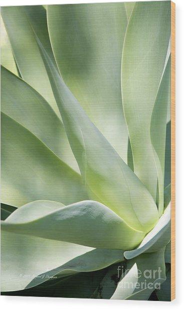Agave Plant 2 Wood Print