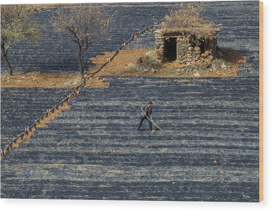 Agriculture Wood Print