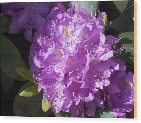 Ah Rhododendron Wood Print