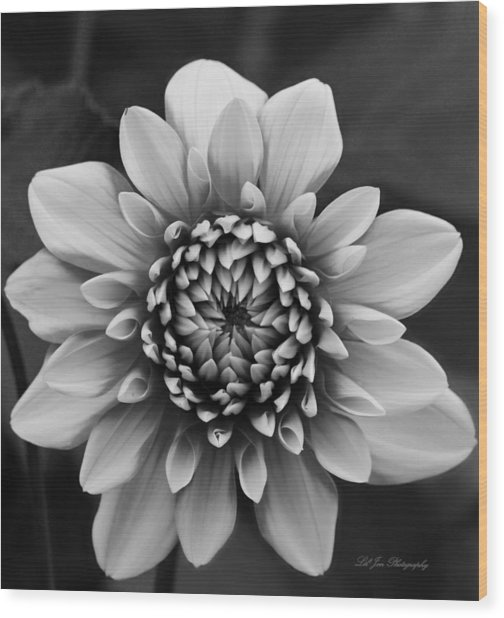 Ala Mode Dahlia In Black And White Wood Print