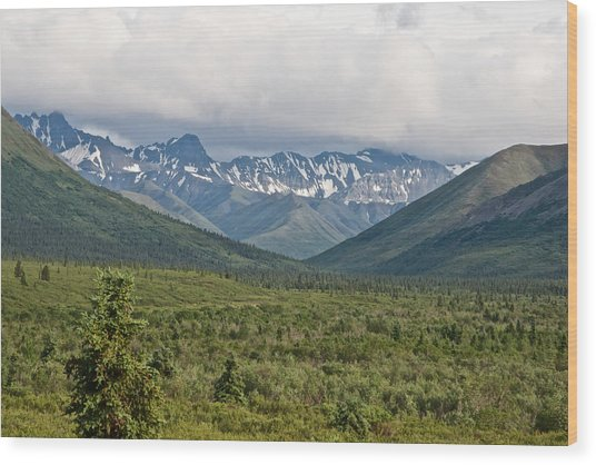 Alaska Range From Mountain Vista Trail In Denali Np-ak Wood Print