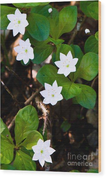 Alaska Wild Flower Wood Print by Chris Heitstuman