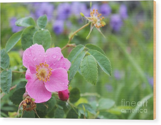 Alaska Wildflowers Wood Print