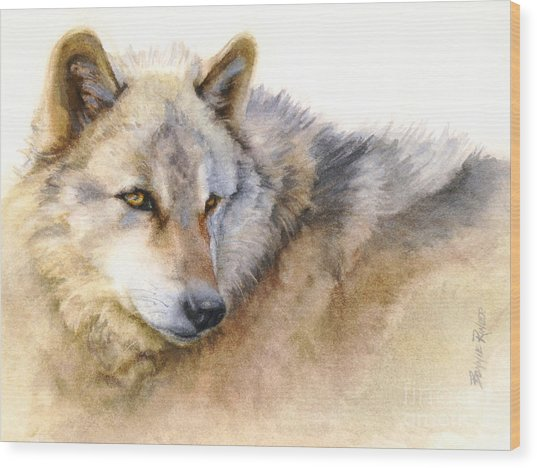 Alaskan Gray Wolf Wood Print